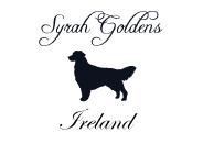 Syrah Goldens Ireland